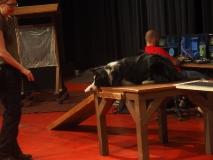 Filmhund.